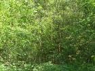 lunar-wood-27-06-10-037