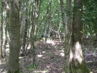lunar-wood-27-06-10-051