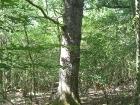 lunar-wood-27-06-10-055