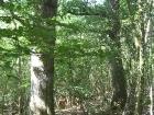 lunar-wood-27-06-10-056
