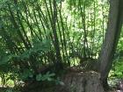 lunar-wood-27-06-10-059