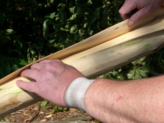 Slide your fingers under the bark