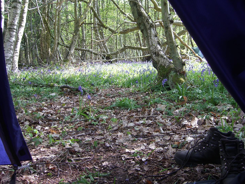 View from tent door 1